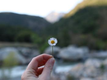 Flowers, mountains, and the river!
