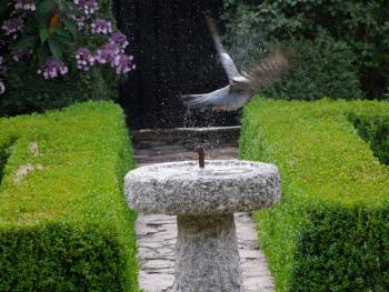 The peaceful gardens are a haven for birds