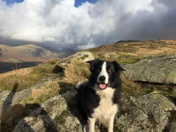 Our collie Tip on Irton Pike