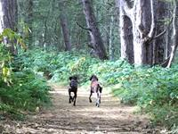 2.  Ainsdale Pine Woods