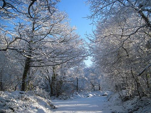 Beautiful in winter...