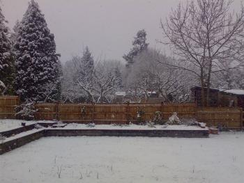 Back garden in the snow!