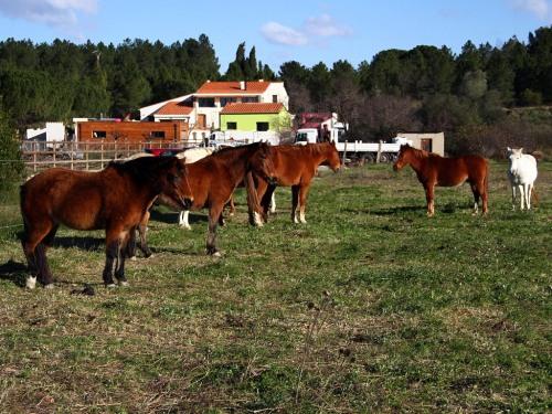 les chevaux d'Aurore