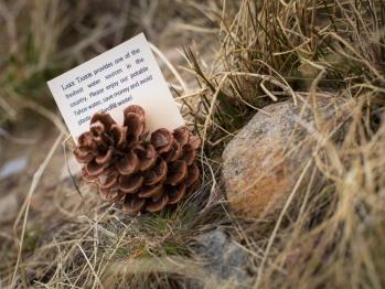 Cedar Glen Lodge is an Eco-friendly resort!