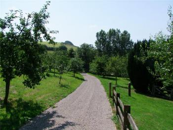 Take a walk through the orchard in the grounds of Ranscombe Manor