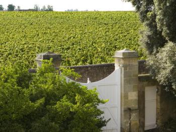 Vue sur les vignes depuis la Chambre Sidonie