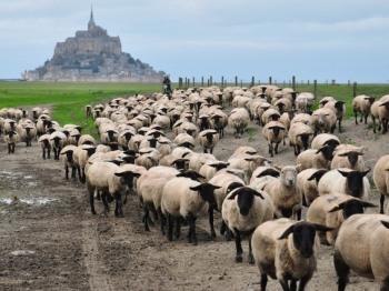 A Découvrir la Transhumance des Moutons