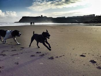 Pet Friendly Cottages Only 10-15 Mins Drive From The Beach