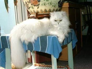 Sasha the cat