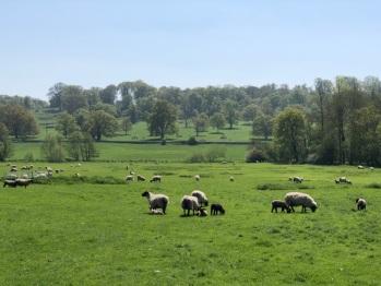 View during Sherborne Castle estates walk