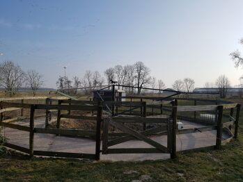 Rundlauf für Pferde