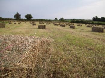 Surrounding hay fields