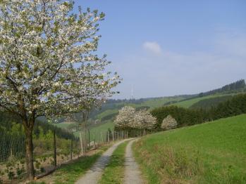 Wandern im Tal