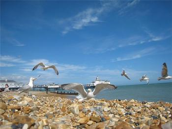 Seaview Guest House | Eastbourne