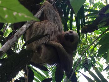 sloth in tree above bungalows
