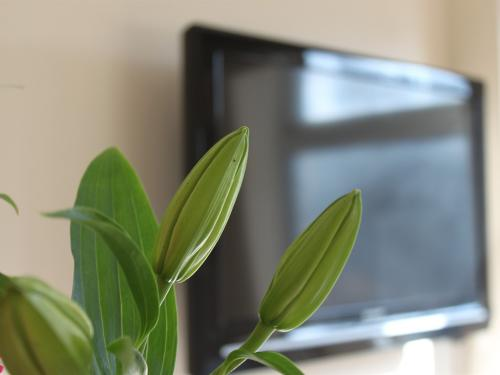 32 inch TV with free view channel in all guest room