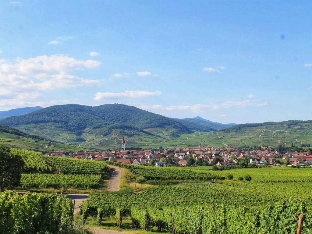 Promenade dans les vignes d'Ammerschwihr
