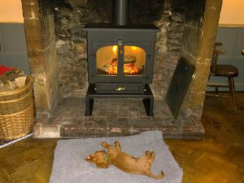 The puppy enjoying the fire
