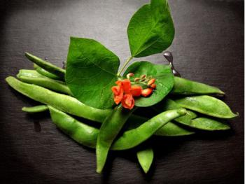 Runner beans from our allotment