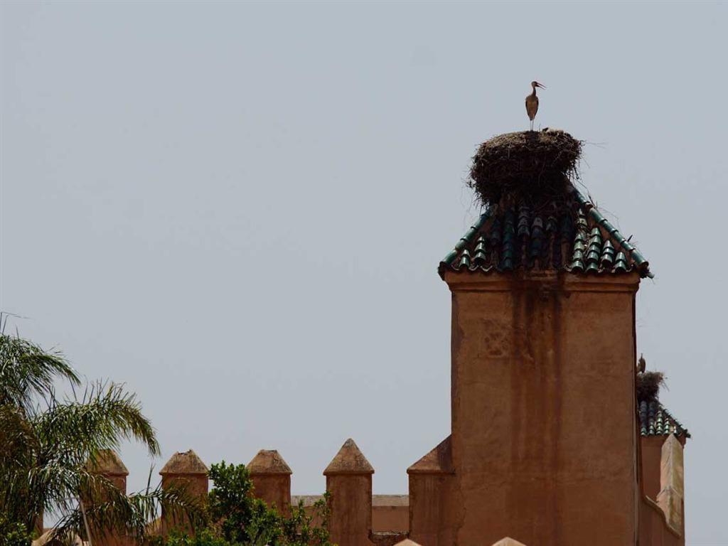 A stork visiting the Royal Palace