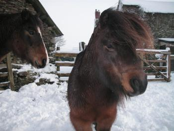 Boyton ponies