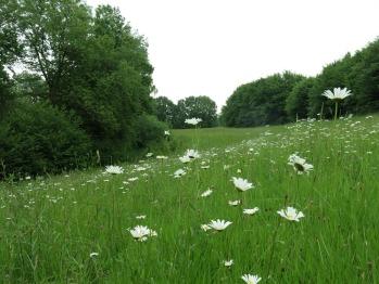 Prairie proche des jardins