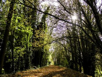 The Meon Valley Trail.