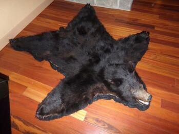 Our local friendly black bear