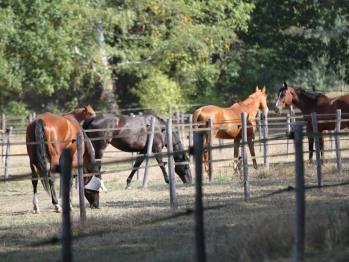 Haras Elevage de chevaux de sport