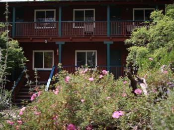 The property is surrounded by beautiful native wildflowers and plants!