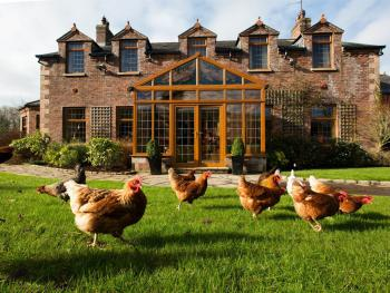 Blackwell House - Blackwell Hens enjoying the Sunshine
