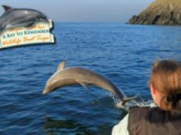 Dolphin Spotting Trips: A Bay To Remember