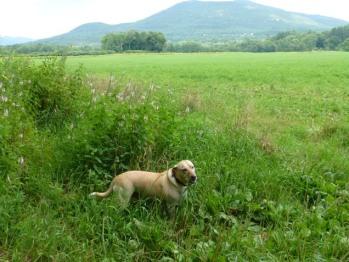 Jed on a nice hike in a beautiful field near by .....