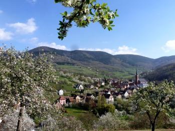 Breitenbach, le village, ses cerisiers ...