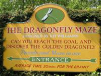 The Dragonfly Maze