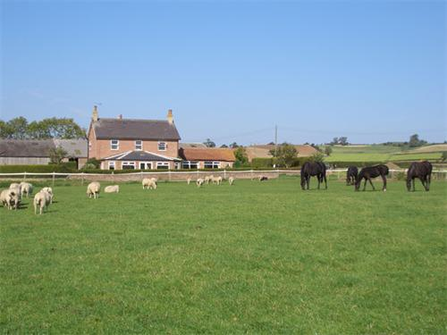 Thornton Lodge Farm enjoy our neighbours - the sheep and lambs and the mares and foals!