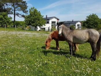 Les chevaux paissent dans les prairies autour des Hauts de Toulvern