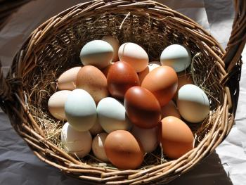 Home produced eggs for breakfast