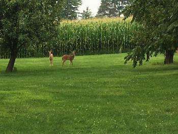 Visitors on our property!