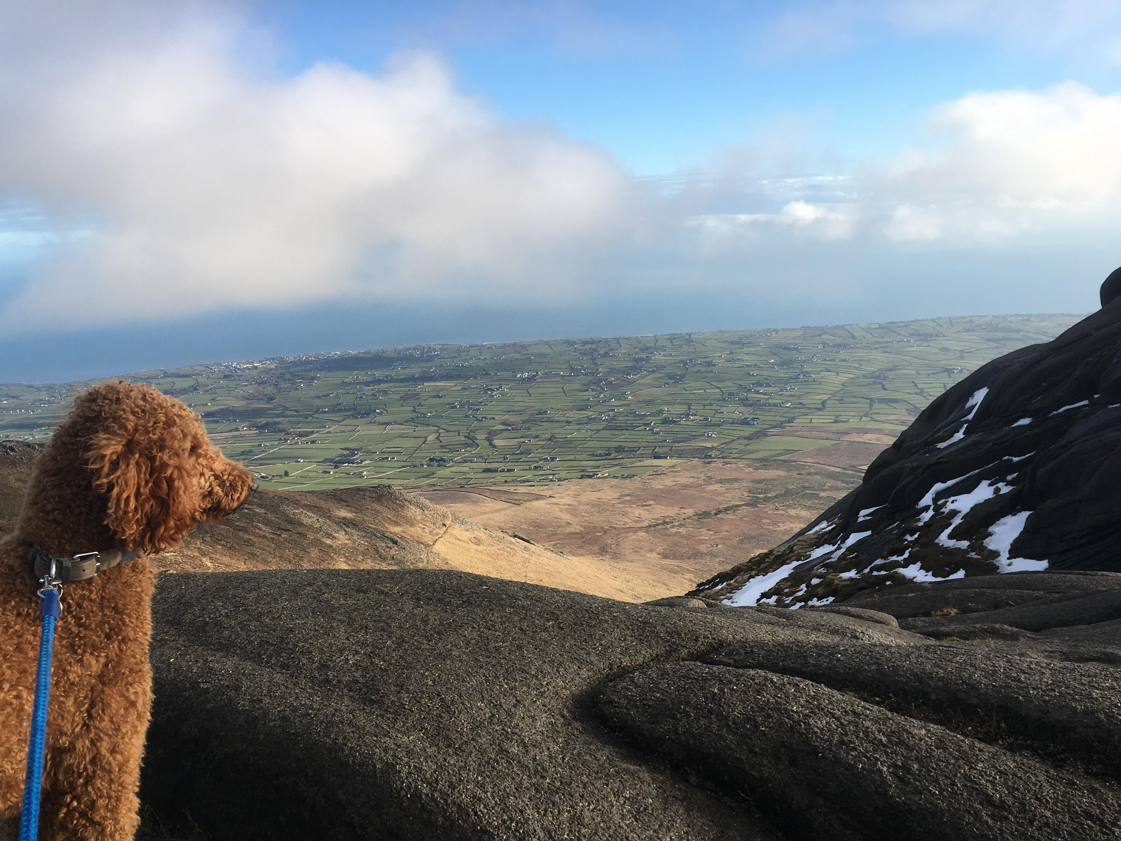 Hugo on Slieve Binnian summit!