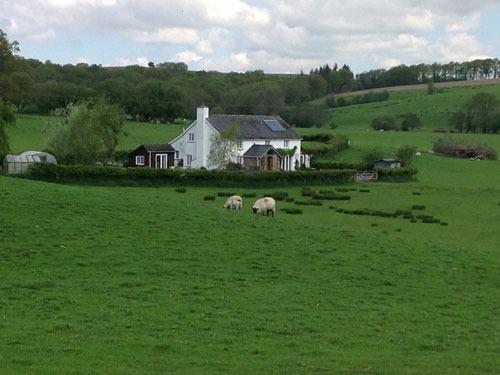 Rhedyn in the fields