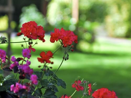 Tudor Grange gardens