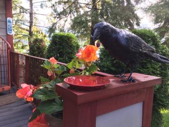 Bronze Raven sets at Ravens Have entrance
