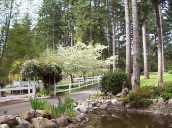 End of Driveway Pond and Trees in Spring