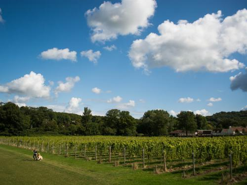 Homefield Vineyard