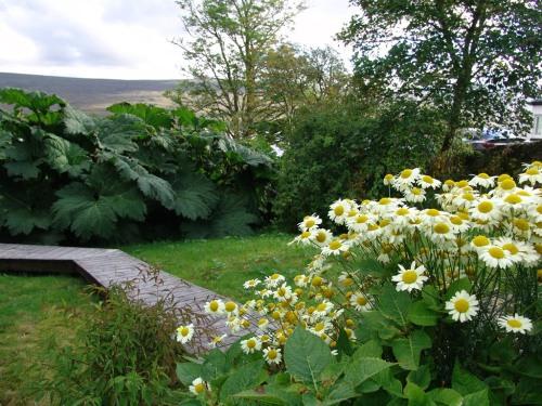 Garden Gunnera