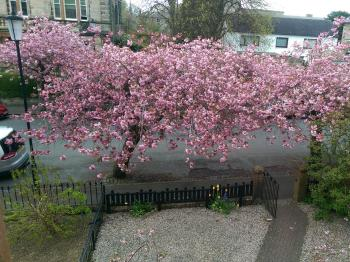 A view from the Cathcart Room in April at Lochinver Guest House