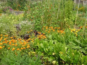 Kilgraney House, Kitchen Garden, Salad Leaves