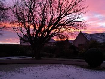 Sun rising over the front garden
