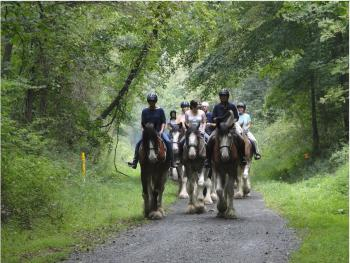 Horse rides on nearby trail